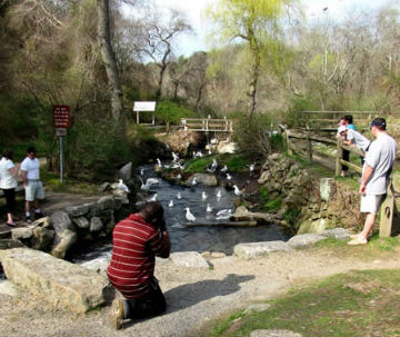 Photograph of Stony Brook Herring Run in Brewster with people watching