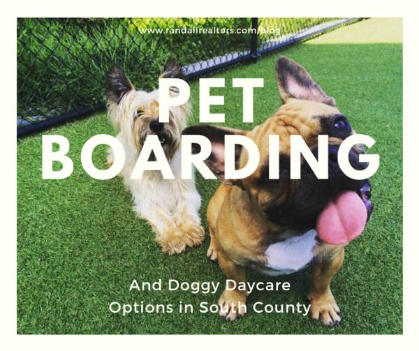 "photograph of two small dogs in the grass with the text, ""pet boarding and doggy daycare options in south county"""