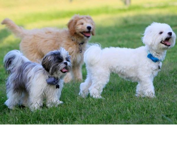 photo of dogs in a park